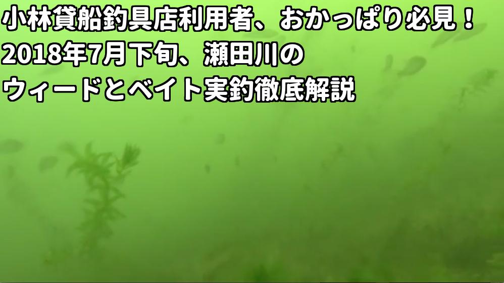 夏の瀬田川ウィードエッジに溜まるベイトの画像