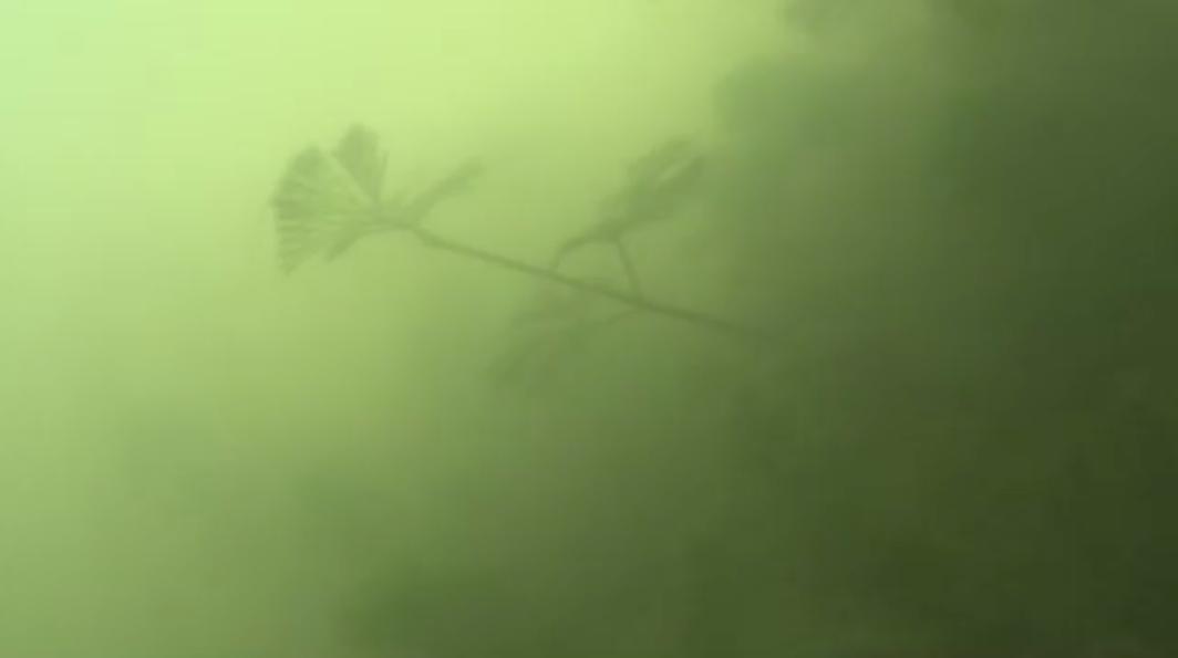 赤野井湾シャローフサモ画像