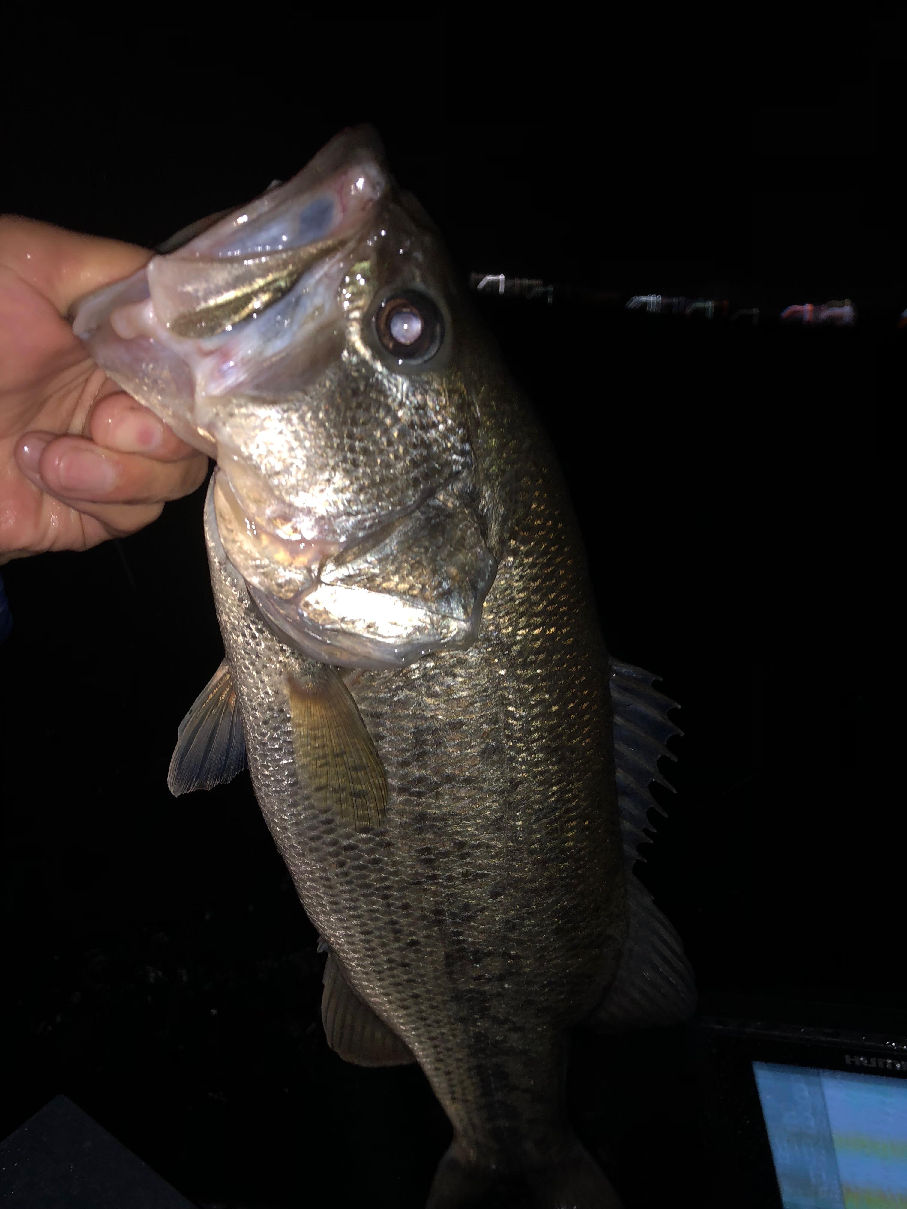 南湖アノストで釣った40UP画像3