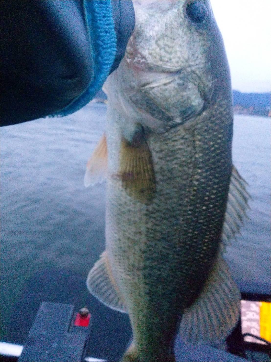 琵琶湖サカマタシャッドノーシンカーで釣った40アップ