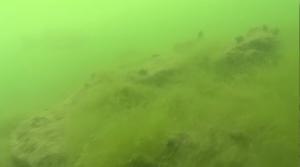琵琶湖南湖ボトムに茂るのり状ウィード