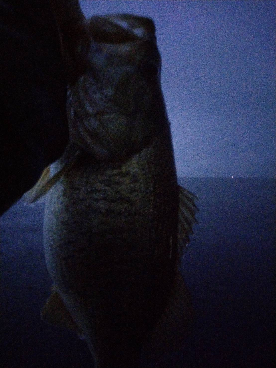 10月24日南湖ディープクランクに釣れたデカバス