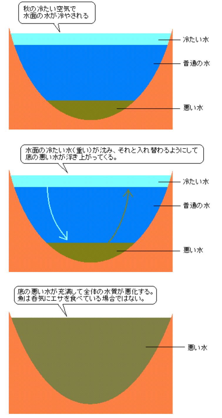 秋に琵琶湖で起こるターンオーバー図解