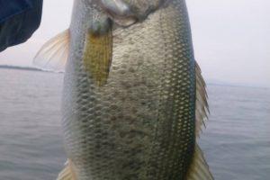 琵琶湖ミノーで釣った40アップ