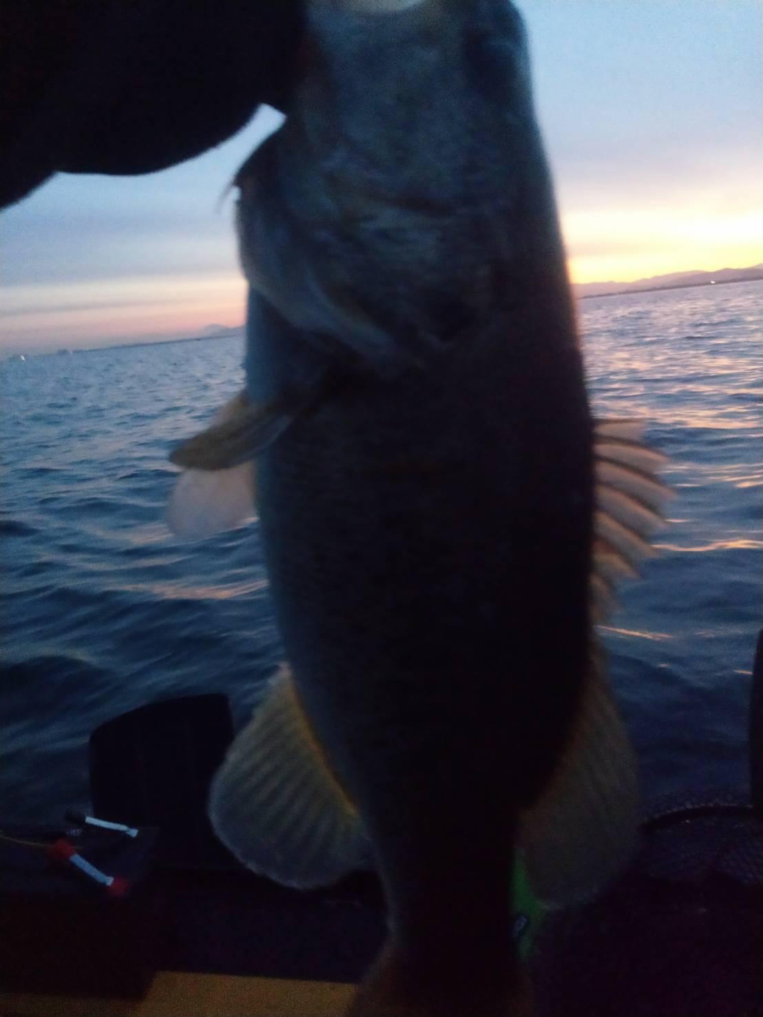 琵琶湖ヘビダンで釣れたデカバス