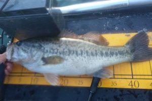 琵琶湖春のヘビダンで釣れたデカバス